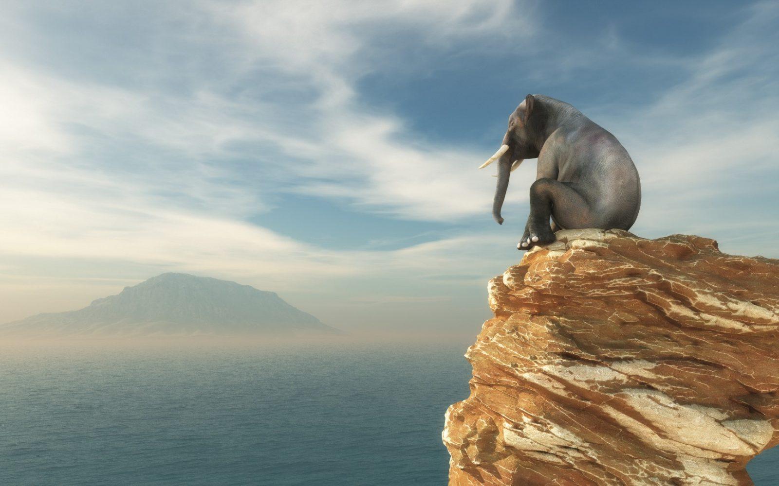 DLF - Digital Leaders Fund - Elefant auf einem Stein schaut auf einen Berg am Horizont