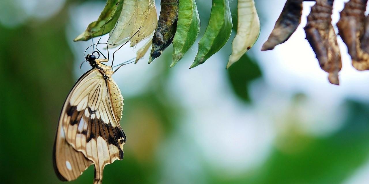 Nutanix Beitragsbild Schmetterling kurz nach dem schlüpfen aus dem Kokon