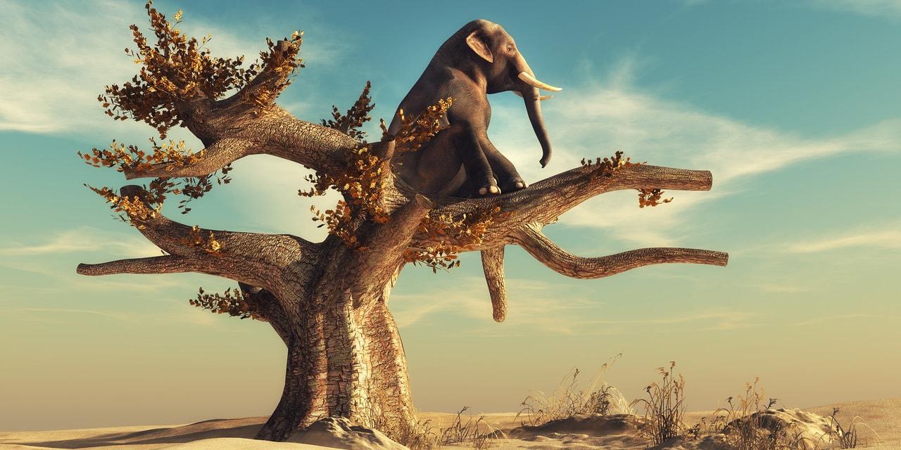 Tech-Fonds DLF - Elefant sitzt auf einem kahlen Baum in der Wüste und schaut ins Weite
