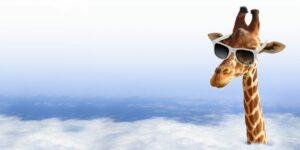 The Trade Desk Aktie - Giraffe schaut über Wolken mit Sonnenbrille