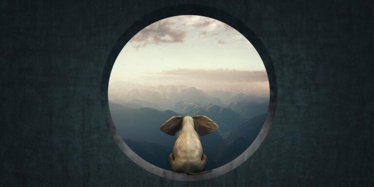 Rückblick auf das spektakuläre Börsenjahr 2020 - Elefant schaut in die Ferne